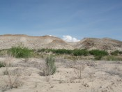 Extensive outcrops of the Ernst member of the Boquillas Fm. overlain by the regional